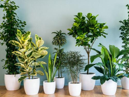 Чем полезны растения вдоме: факты иприметы